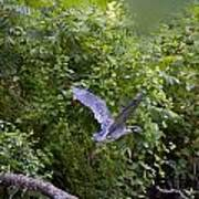 Blue Heron Journey I Art Print