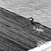 Blue Heron On Dock - Grayscale Art Print