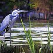 Blue Heron On The Bay Art Print