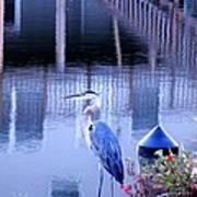 Blue Heron Reflections Art Print