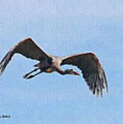 Blue Herons Last Fly By Art Print