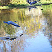 Blue Herons On Golden Pond Art Print