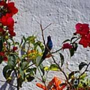 Blue Hummingbird Art Print