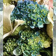 Blue Hydrangeas Painterly Art Print