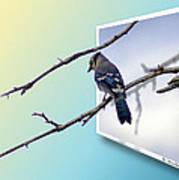 Blue Jay Branch Art Print