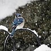 Blue Jay In Snow Storm Art Print