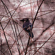 Blue Jay In The Willow Art Print