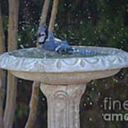 Blue Jay Loves To Splash Water Art Print
