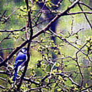 Blue Jay - Paint Effect Art Print