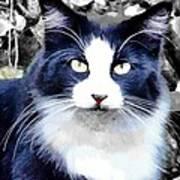 Blue Kitty Two Art Print