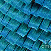 Blue Morpho Wing Scales Art Print