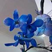 Blue Orchids At All Art Print