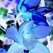 Blue Orchids Art Print