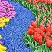 Blue Path Of Flowers Art Print