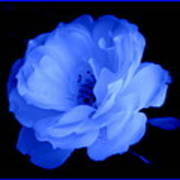 Blue Perfection Art Print