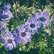 Blue Poppies Blooms Art Print