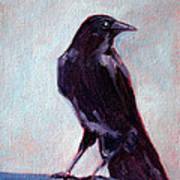 Blue Raven Art Print