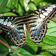 Blue Sea Butterfly Art Print