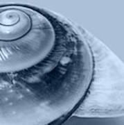 Blue Shell Art Print