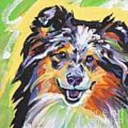 Blue Sheltie Art Print