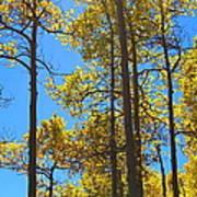 Blue Skies And Golden Aspen Trees Art Print