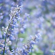 Blue Sonata Art Print