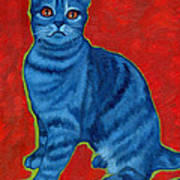 Blue Tabby Art Print