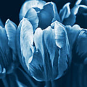 Blue Tulip Flowers Art Print