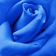 Blue Velvet Rose Flower Art Print by Jennie Marie Schell