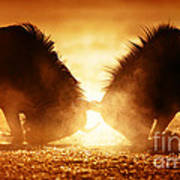 Blue Wildebeest Dual In Dust Art Print