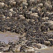 Blue Wildebeest Migration Art Print