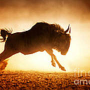Blue Wildebeest Running In Dust Art Print