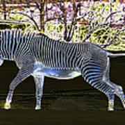 Blue Zebra Art Print