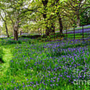 Bluebell Way Art Print