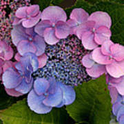 Blueberries And Cream Art Print