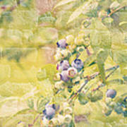 Blueberries Painted On The Wall Print by Alanna DPhoto