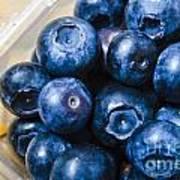Blueberries Punnet Art Print
