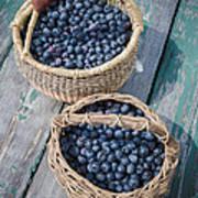 Blueberry Baskets Art Print