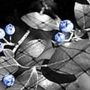 Blueberry Magic Art Print
