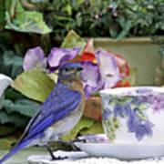 Bluebird And Tea Cups Art Print