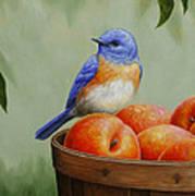 Bluebird And Peaches Greeting Card 3 Art Print