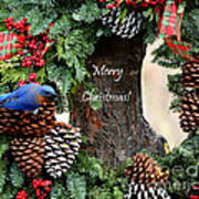 Bluebird Christmas Wreath Art Print