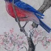 Bluebird In Cherry Blossoms Art Print