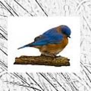 Bluebird In Prairie Frame Art Print