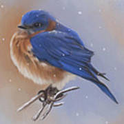 Bluebird In The Snow Art Print