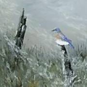 Bluebird On Post Art Print