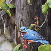 Bluebird - Red Berries Art Print