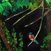Bluebird Shimmer Art Print