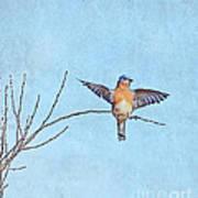 Bluebird Wings - Minimalism Art Print