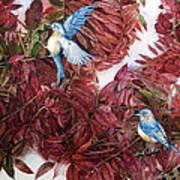 Bluebirds Love Sumac Art Print by Helen Klebesadel